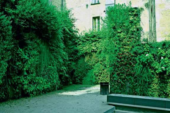 Popínavky mohou fungovat jako zelená fasáda i jako zelená stěna.