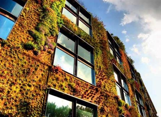 V případě podobné fasády, vlastně už vertikální zahrady, se bez spolupráce s botanikem neobejdete.
