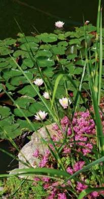 zahrada-kvetiny-05 19638