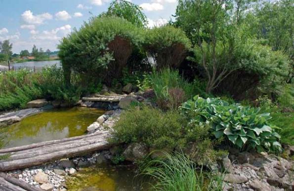 Romantické zákoutí s jezírkem obklopují vrbičky, dekorativní traviny a bohyška, vzadu je pohled na velký rybník.