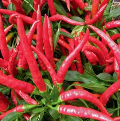 Kozí rohy jsou velkou skupinou paprik s dlouhými, špičatými a tenkostěnnými plody. Odrůdy ´Dloubánek´a ´Grilánek´ jsou mírnější chuti a žluté barvy. Paprika ze skupiny Beraní rohy ´Beatrix – 1´ má červené plody a je vhodnější pro fóliovník.