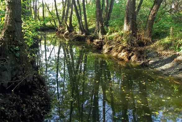 Krásný meandr potoka Botiče v Praze, u Toulcova Dvora. Zachoval se uprostřed velkoměsta jako zázrakem. Plní stále své důležité funkce, včetně ukázkové a vzdělávací. Voda v přírodních tocích stoupá i klesá a příroda si s ní poradí.