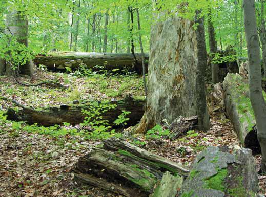 Poctivý les slouží lépe než přehrada. Vodu pohltí jako houba do své humózní půdy a tlejícícho dřeva. V období sucha tuto vláhu pouští do bystřinek a potoků.