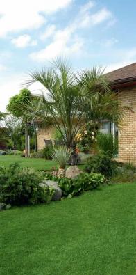 Palmový háj v české zahradě