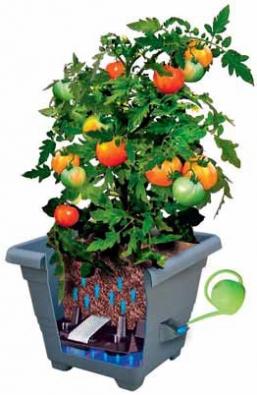 Princip samozavlažovacích květináčů: rostlina si pomocí knotů bere ze zásob tolik vody, kolik potřebuje.