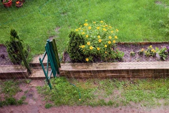 Jak ochránit zahradu