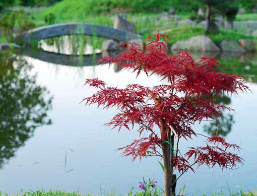 Odraz stromů ve vodní hladině je nezapomenutelnou kompozicí.