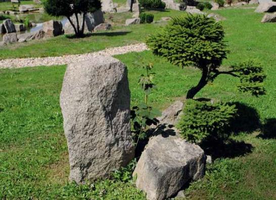 Nechybějí ani smrky východní (Picea orientalis) v kompozici s kameny.