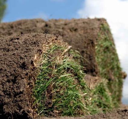 Trávníky realizované pokládkou mají oproti trávníkům setým tendenci během roku vytvářet mnohem více tzv. stařiny.