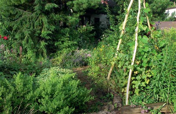 """Vzrostlá zahrada, ze které se """"odpad"""" nevyváží pryč, uživí sama sebe. Vše, co zemře, se rozloží na původní prvky a ty se opět radostně vrhnou do nového koloběhu života."""