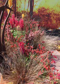 Nejkrásnější rostliny v ohnivých odstínech