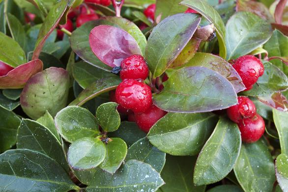Ozdoba zimní zahrady
