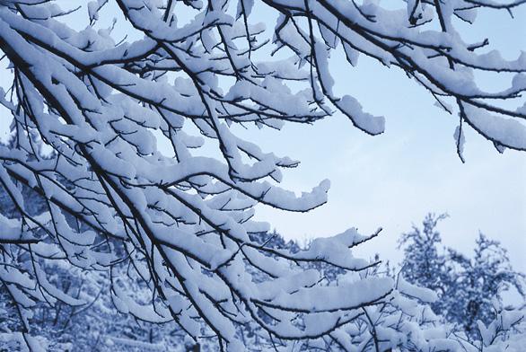 Pohádkovou dekorací zimní zahrady jsou zasněžené koruny velkých stromů. V zimě vynikne krása kůry mladých větví i starých kmenů. Strom bývá symbolem svatby nebo narození dítěte. Stará jabloň vzpomínkou na prapraděda. Každá zahrada by měla mít svůj strom, o který s láskou pečuje celá rodina!