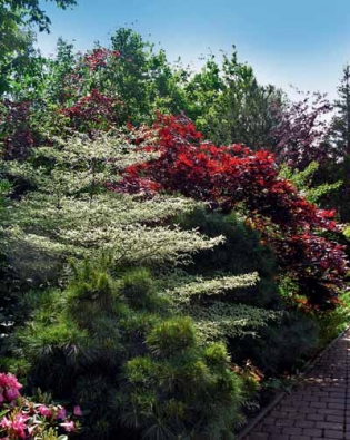 Rostlinné kompozice zahradních architektů si zakládají na barevných kontrastech. Zahrada musí být krásná v každém ročním období a společně s krajinou v Podkrušnohoří vytvářet harmonický celek.