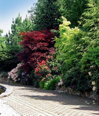 Výrazná barva japonských javorů (v zahradě jich najdeme přes 400) prozáří profesionálně provedené zahradní kompozice.