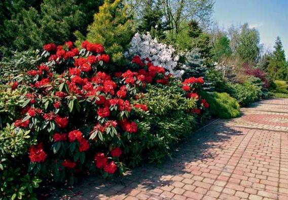 Rododendrony jsou hlavní chloubou majitele. Dováží je z celého světa. Své místo mají i u jezera nové zahrady.