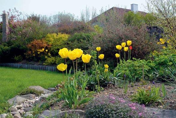 Tulipány ukrývají tajemství