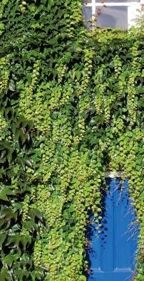 Palisády se nabízejí v nejrůznějších variantách, barvách a velikostech od čtyřiceti centimetrů až do dvou metrů.