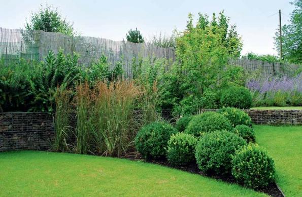 Buxusové kuličky v zadní části zahrady vytvářejí kontrastní kompozici s volně rostoucími okrasnými trávami (Miscanthus sinensis 'Kleine Fontane').