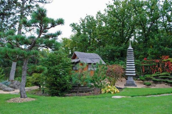 Nad čajovou chýší se sklání borovice lesní (Pinus silvestris), vpravo se tyčí třináctiposchoďová pagoda.