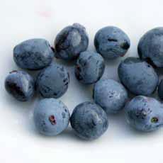Různé odrůdy zimolezu kamčatského mají odlišné tvary bobulí i příchutě. Novější kultivary jsou sladší a mají větší plody. V zahradě je to nejranější ovoce.