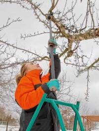 Aby byly stromy zdravé a po dlouhá léta bohatě plodily, vyžadují pravidelný řez. Důležité je však vhodné načasování, provedení a správné náčiní. Dobře poslouží například univerzální zahradní nůžky nebo pilky.