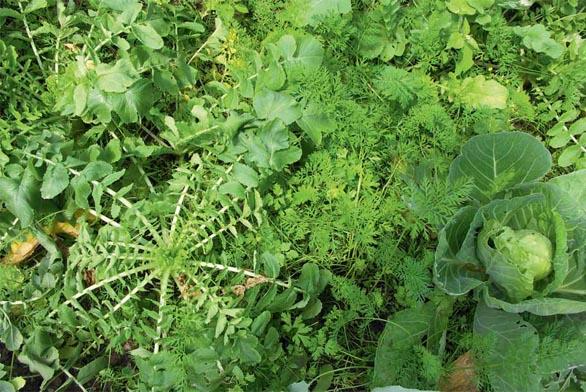 Zelenina se dá pěstovat i pro zábavu