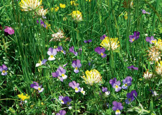 Druh louky se vyvine na každém kousku jiný, podle půdy, podloží, vláhy a dostupných druhů květin.