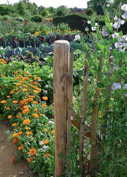 Užitková zahrada může být také krásná.