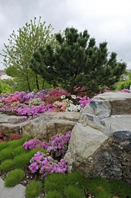Zahradu upřední části domu tvoří  nádherný azalkový záhon, nad nímž  se majestátně tyčí vzácná černá borovice bochníkovitého tvaru.