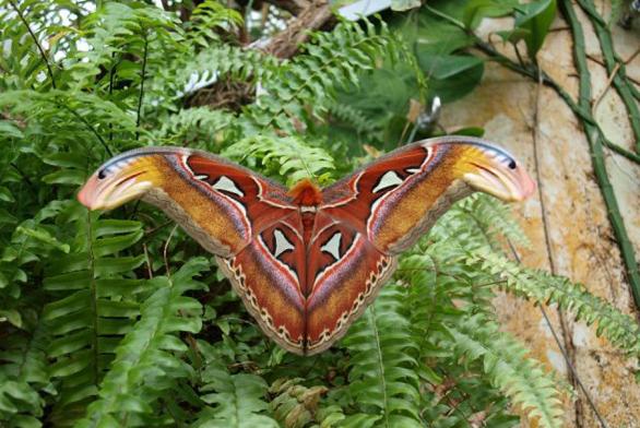 Výstava motýlů v Botanické zahradě v Praze