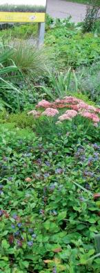 Vždy je důležité rozhodnout se, jakou úlohu bude trávník na zahradě plnit.