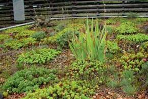 Alternativa k anglickým trávníkům