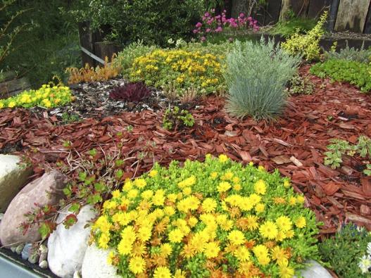 Pokud mají rostliny na střeše dostatek vody, dokáží za rok ztrojnásobit svoji velikost. Vymezování teritoria rostlin pomocí kamenů akůry sice pomůže, nicméně skalničky si najdou cestu pro svou expanzi itady.