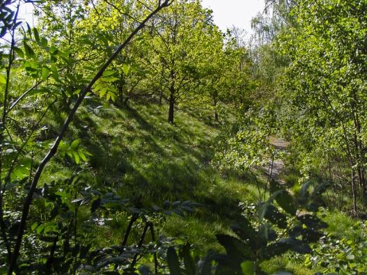 Jste-li majiteli kusu pozemku třeba vkategorii orná půda, trvalý travní porost nebo sad, zlegislativního hlediska je důležité, že tvrdý sad je stále sad, nikoliv les.