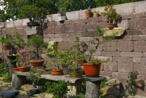 Zahradní ploty a zídky