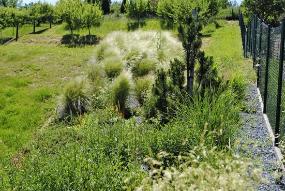 Suchomilní trvalková výsadba v kontrastu se starým ovocným sadem. V popředí svíčkovec (Gaura lindheimeri) a kavyl (Stipa tenuissima ´Pony Tails´).