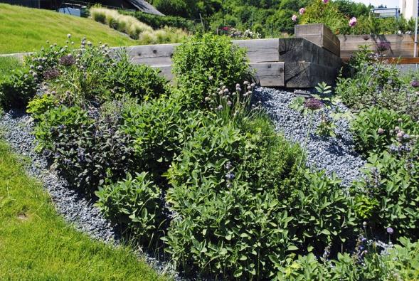Bylinkový záhon s převahou šalvěje (Salvia officinalis), máty (Mentha piperita)  a pažitky (Allium schoenoprasum).