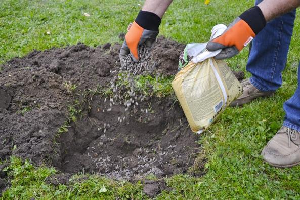 Kromě fosforečných nebo draselných hnojiv můžeme použít ihnojiva kombinovaná, například NPK nebo Cererit.
