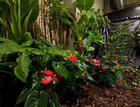 Novinkou budou menší květinové expozice s vtipným nádechem, které návštěvníci najdou po celém areálu výstaviště.