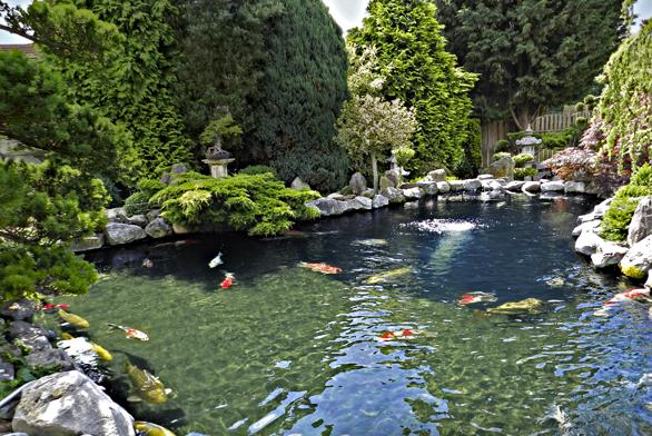 Co si přejí zlaté rybky v zahradním jezírku?