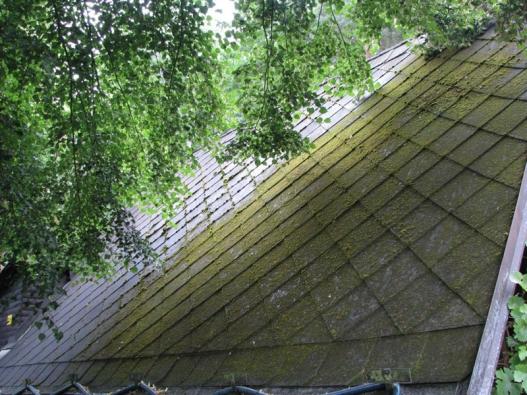 Staré azbestocementové krytiny jsou často porostlé mechy a lišejníky...