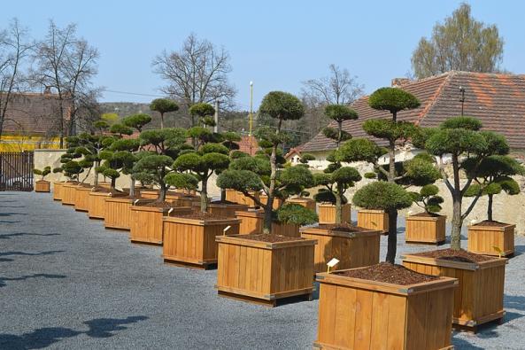 Stromy a velké keře se nejčastěji prodávají  a přepravují v dřevěných kontejnerech, které před vysazením snadno rozeberete. Dejte při tom pozor, ať nepoškodíte kořenový bal!