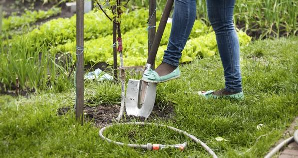 Místo, kde budou vbudoucnu prorůstat kořeny, je nutné před zahájením výsadby řádně připravit.
