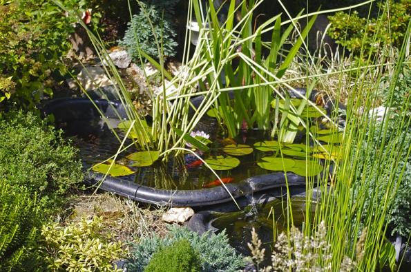 V malé zahradě zbylo místo i na dvě jezírka se zurčící vodou. V každém je leknín, daří se v nich upolínu, vodním kosatcům a podobně, v jejich blízkosti se zdržují žáby.