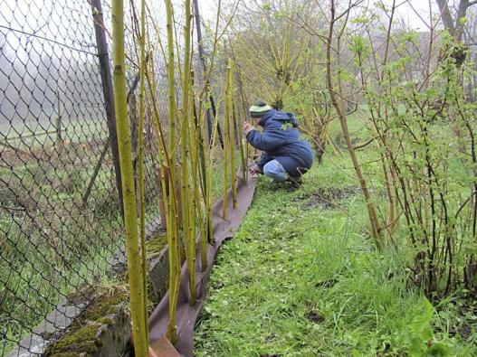 Textilie chrání před prorůstáním plevele  a trávy, usnadňuje údržbu. Zakryje se mulčem.