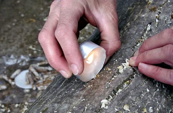 Na jaře můžeme sázet také houby, například hlívu ústřičnou. Použijeme špalek z kmene pokáceného ořešáku, do navrtaných otvorů vtlačíme kolíčky sadby a uzavřeme voskem (2).