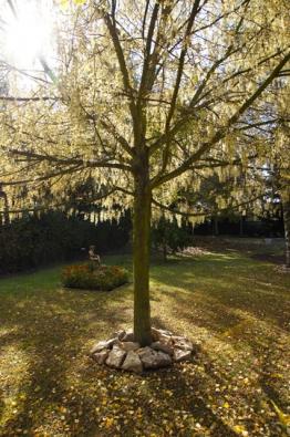 Majitelé vykáceli téměř všechny stromy a zasadili nové (listnáče i jehličnany a celou paletu keřů).