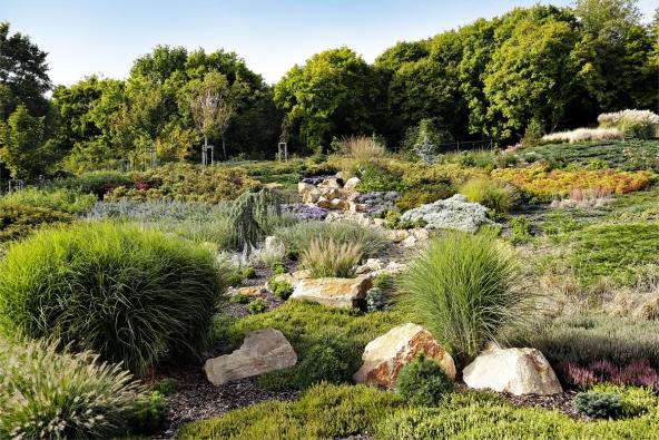 Druhou velkou část zahrady nalevé straně domu tvoří rozsáhlé vřesoviště. Sahá až khorní hranici pozemku. Tato působivá kompozice přináší vkaždé roční době majitelům zahrady potěšení zrozkvetlých dřevin atrvalek. Již vúnoru se hlásí rozkvetlé vřesovce (Erica) vbarevných odstínech. Další barevné efekty celoročně obstarávají kvetoucí trvalky, které tvoří přirozenou součást tohoto vřesovištního společenstva. Podzim je vyhrazen kvetoucím vřesům (Calluna), hvězdnicím (Aster) aokrasným travám.