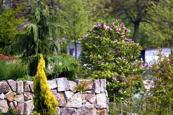 Vevřesovištním celku zahrady je použita výsadba zakrslých kultivarů japonských azalek, rozkvétající vjarním období. Vyžadují kyselou půdní reakci.